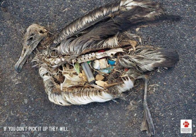 لا تلقي القمامة في الطريق إعلان